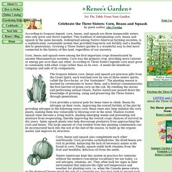 Three Sisters Garden: Corn, Beans, Squash - A Native American tradition