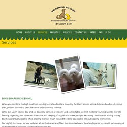 Novato Pet Sitting, Dog Grooming, Daycare Marin County