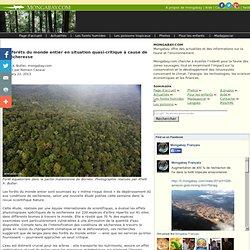 Les forêts du monde entier en situation quasi-critique à cause de la sécheresse