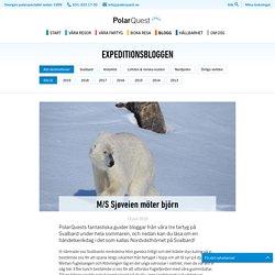 M/S Sjøveien möter björn – PolarQuest