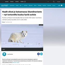 Naalit olivat jo katoamassa Skandinaviasta – nyt tuntureilta kuuluu hyviä uutisia