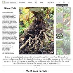 Skirret, Non-GMO, Organic