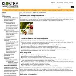 Sköt om dina jordgubbsplantor - Klostra