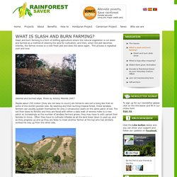 What is slash and burn farming?