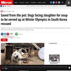 Saved from the pot: Dogs facing slaughter for soup to be served up at Winter Olympics in South Korea rescued