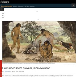 How sliced meat drove human evolution
