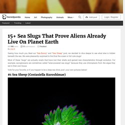 15+ Sea Slugs That Prove Aliens Already Live On Planet Earth