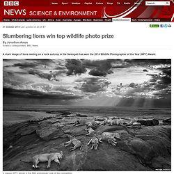 Slumbering lions win top wildlife photo prize