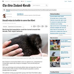 Small wins in battle to save the Kiwi - NZ Herald