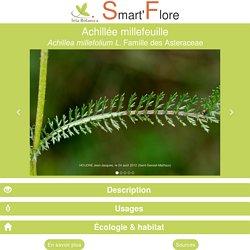 Smart'Flore