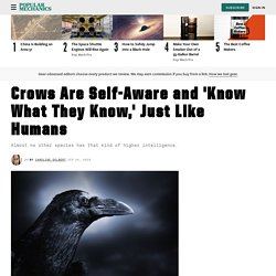 Smartest Birds: How Smart Are Crows Compared to Humans?