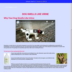 Dog Smells Like Urine – In Home Pet Care