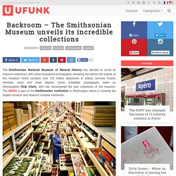Backroom – The Smithsonian Museum unveils its incredible collections