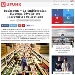 Backroom – Le Smithsonian Museum dévoile ses incroyables collections