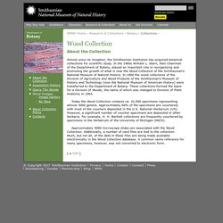 Wood Collection / Department of Botany, National Museum of Natural History, Smithsonian Institution