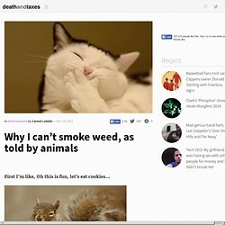 Why I can't smoke weed, as told by animals