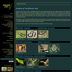 Snakes of Southeast Asia