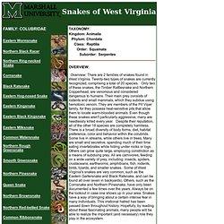 Snakes of West Virginia