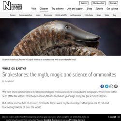 Snakestones: the myth, magic and science of ammonites
