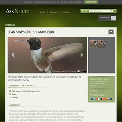 Beak snaps shut: hummingbird