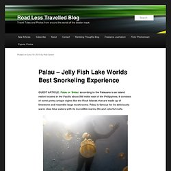Palau – Jelly Fish Lake Worlds Best Snorkeling Experience — Road Less Travelled Blog