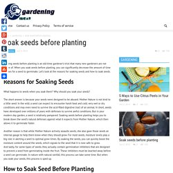 Soak seeds before planting