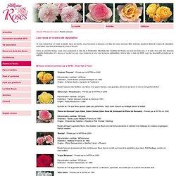 Société Française des Roses - Galerie de photos des roses et de rosiers connus ou réputés