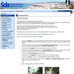 Société de défense des animaux, Nice, (SDA) site officiel - Les bénévoles