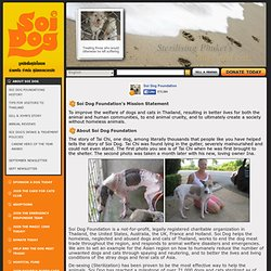 Soi Dog Foundation - About Soi Dog