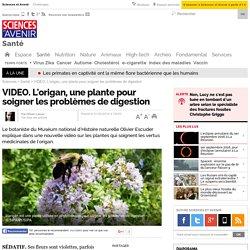 VIDEO. L'origan, une plante pour soigner les problèmes de digestion