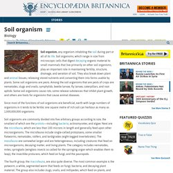 soil organism