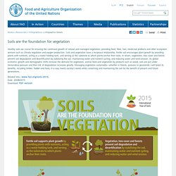 Soils are the foundation for vegetation