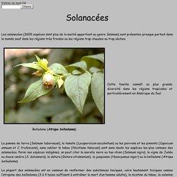Solanacées