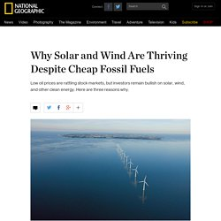 Why Solar and Wind Thrive Despite Cheap Oil and Gas