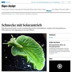 Schnecke mit Solarantrieb - News Wissen: Natur