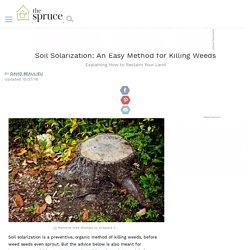 Soil Solarization: An Easy Method for Killing Weeds