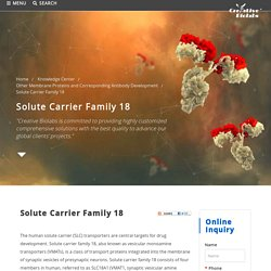 Solute Carrier Family 18