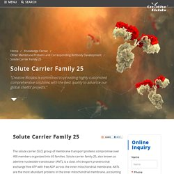 Solute Carrier Family 25