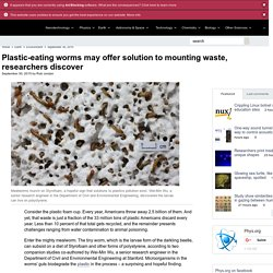 Plastic-eating worms may offer solution to mounting waste, researchers discover