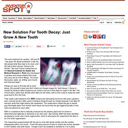 New Solution For Tooth Decay: Just Grow A New Tooth