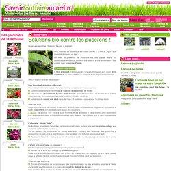 Puceron vert pearltrees - Traitement naturel contre les pucerons ...