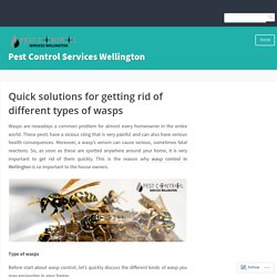 Quick solutions for getting rid of different types of wasps – Pest Control Services Wellington