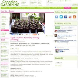 Eight solutions for sorry-looking seedlings - Solutions for sorry-looking...