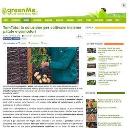 TomTato: la soluzione per coltivare insieme patate e pomodori