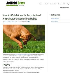 Solving Bad Pet Habits with Artificial Grass for Dogs in Bend