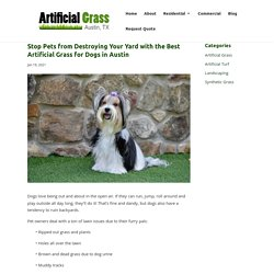 Solving Lawn Issues with the Best Artificial Grass for Dogs in Austin