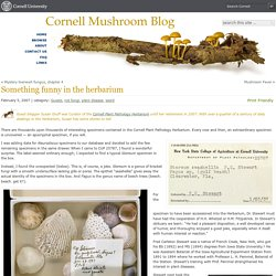 Something funny in the herbarium :Cornell Mushroom Blog