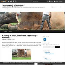 Contrary to Belief, Sometimes Tree Felling is Necessary - Trädfällning Stockholm