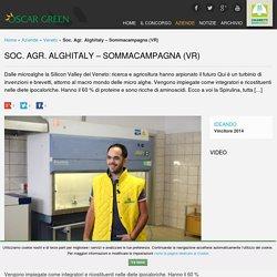 Soc. Agr. Alghitaly - Sommacampagna (VR)