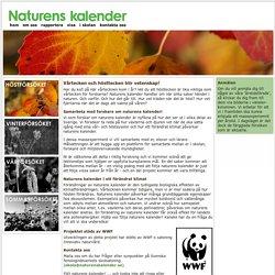 Naturens kalender i skolan – följer vårtecken, sommartecken och hösttecken